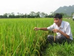 Tăng cường năng lực ứng phó với biến đổi khí hậu cho nông nghiệp