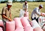 NSNN hỗ trợ 100% lãi suất tiền vay mua thóc, gạo tạm trữ