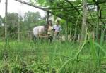 Thừa Thiên - Huế cho hộ gia đình sản xuất, kinh doanh vùng khó khăn vay vốn ưu đãi phát triển kinh tế