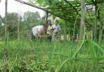 VBSP Thừa Thiên - Huế: Bám sát dân để giảm nghèo bền vững