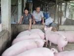 Những phụ nữ làm giàu từ chăn nuôi