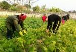 Nông dân Bắc Ninh thêm vốn sản xuất