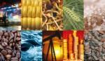 Phòng ngừa rủi ro biến động giá nông sản