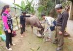 Hộ cận nghèo ở Trấn Yên được tiếp sức