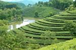 Hiệu quả thiết thực của nguồn vốn chính sách ở Phú Thọ