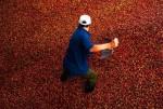 Rabobank: Thế giới sẽ thừa 5,3 triệu bao cà phê trong vụ tới