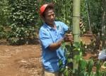Hộ cận nghèo tại tỉnh Bà Rịa - Vũng Tàu vươn lên phát triển kinh tế bền vững