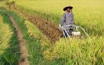 Thu hút FDI vào nông nghiệp: Vực dậy bệ đỡ nền kinh tế