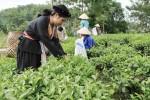 Tạo vững niềm tin ở vùng đất chè Thái Nguyên
