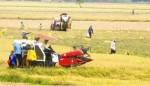 Yếu điểm của nông nghiệp, nông thôn