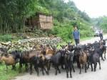 Đổi mới ở Hạ Lang