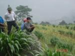 Hoàng Su Phì sử dụng hiệu quả nguồn vốn hỗ trợ sản xuất nông nghiệp