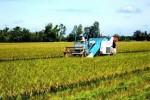 Phát hành cổ phiếu giá ưu đãi cho nông dân