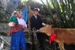 Trao tặng bò giống giúp đồng bào nghèo khu vực biên giới