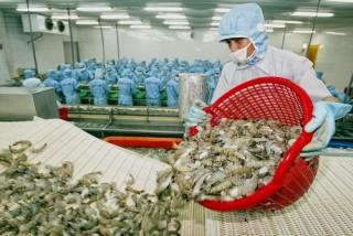 Xuất khẩu tôm sang Nhật Bản tăng mạnh