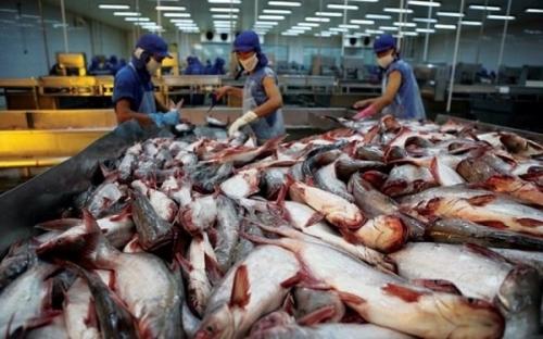 Mỹ công nhận hệ thống an toàn thực phẩm của cá da trơn Việt Nam