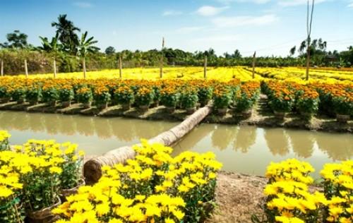 Mua hoa cây cảnh trên sông nước miền Tây