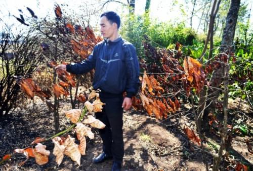 Đắk Lắk: Lò đốt than lộng hành