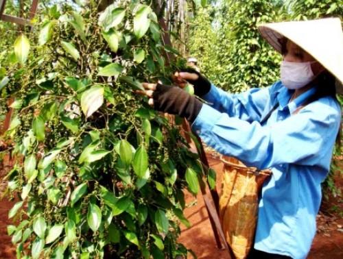 Xuất khẩu nông sản chế biến ngày càng khó