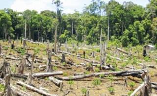 Mất rừng, do đâu?