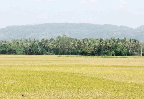 Cú hích để cơ giới hóa nông nghiệp