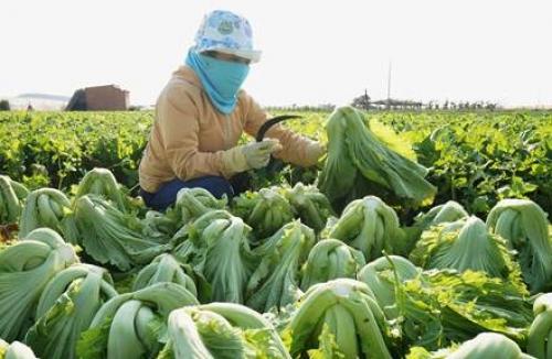 Phát triển chuỗi tiêu thụ rau, thịt an toàn: Nhu cầu cấp thiết