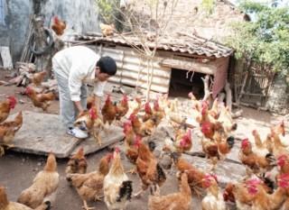 Nỗi lo của ngành Nông nghiệp