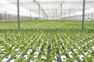 Tổ chức hội thảo nông nghiệp thông minh ở Đồng Tháp