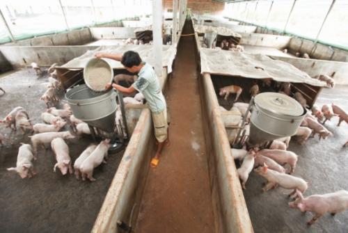 Ngành chăn nuôi hướng đến chuỗi giá trị bền vững