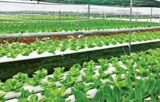 Khởi nghiệp từ nông sản sạch