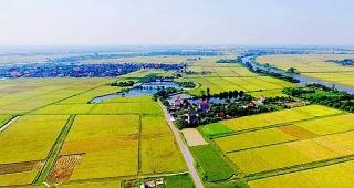 Chuẩn hóa đất nông nghiệp để hút vốn