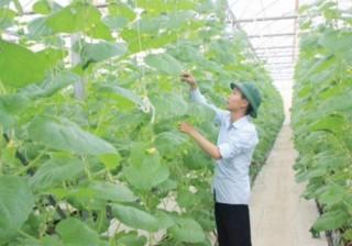 Khơi thông nguồn vốn vào nông nghiệp