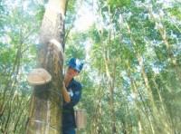 Đầu tư sang Lào và Campuchia: Để giảm thiểu rủi ro