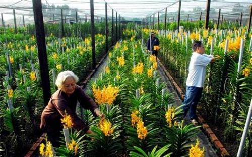 Bảo hiểm nông nghiệp: Bảo vệ quyền lợi chính đáng cho nhà nông