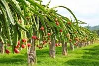 FLC Biscom được chấp thuận đầu tư nông nghiệp công nghệ cao tại Quảng Trị