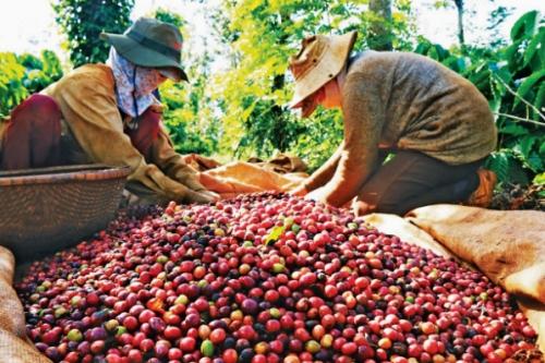 Cơ hội cho cà phê Việt Nam.
