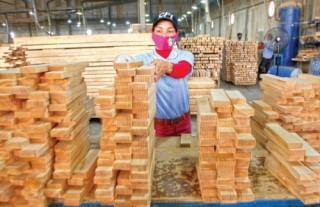 Doanh nghiệp ngành gỗ nhiều thuận lợi