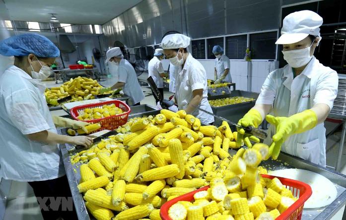 Chung tay thúc đẩy xuất khẩu nông sản Việt