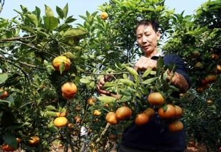 Tín dụng chính sách góp phần giảm nghèo bền vững ở Hưng Yên