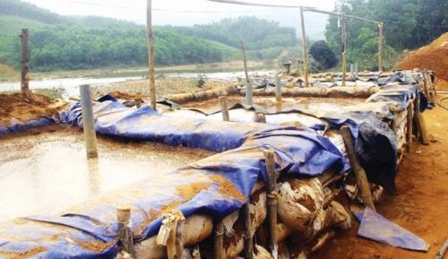 Cần giải pháp dài hạn cho Bồng Miêu