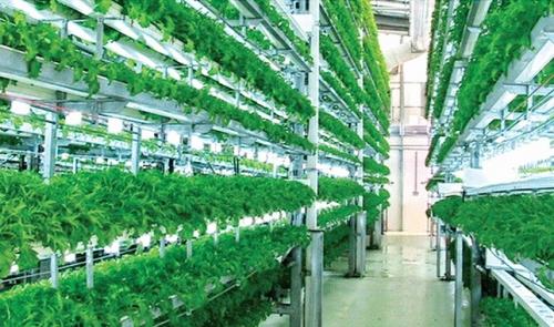 Tạo đột phá trong nông nghiệp