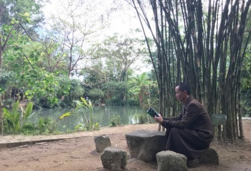 Vườn bảo tồn tre trúc Việt  giữa lòng thành phố