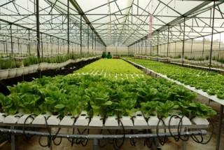 Để nâng cao hiệu quả sản xuất nông nghiệp
