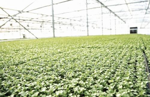 Phát triển nông nghiệp sạch không dễ