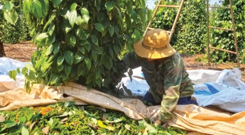 Cần giải pháp hỗ trợ người nông dân
