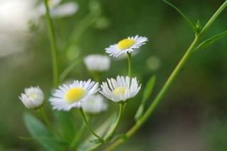 Như hoa dại ven đường