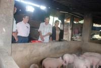 Đà Nẵng: 8.595 hộ thoát nghèo nhờ tín dụng chính sách