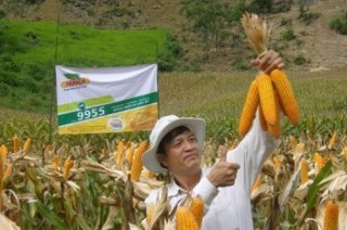 Nông nghiệp thí điểm PPP: Khối ngoại đua sức