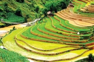 Ngành Ngân hàng tỉnh Yên Bái: Lấy kinh tế nông - lâm làm trọng tâm