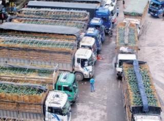 Cần giải pháp dài hơi cho nông sản